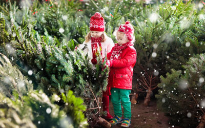 The Mythological Tradition and Symbolism of Christmas Trees