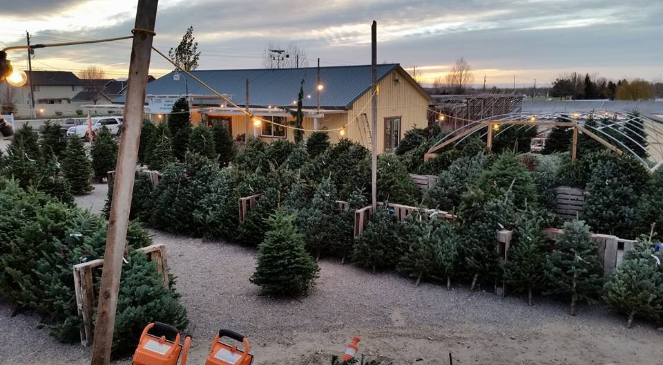 Christmas Trees on Sale at Adams Gardens in Nampa, Idaho
