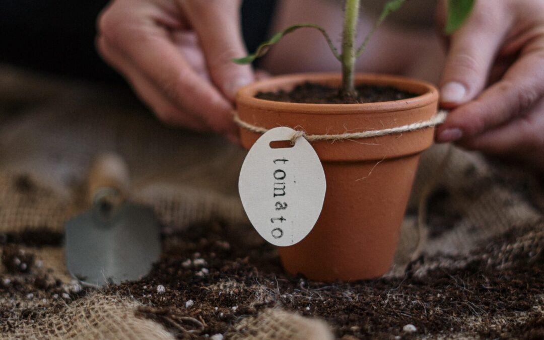 Spring Planting Guide & Calendar for Boise Area