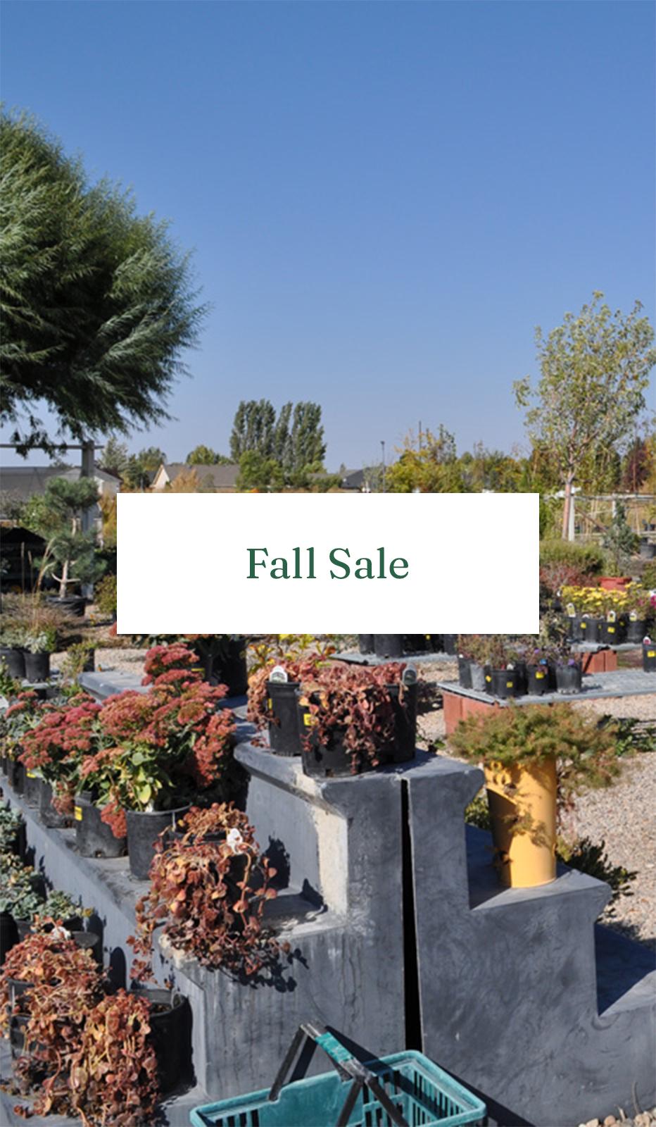 Fall Sale Mobile