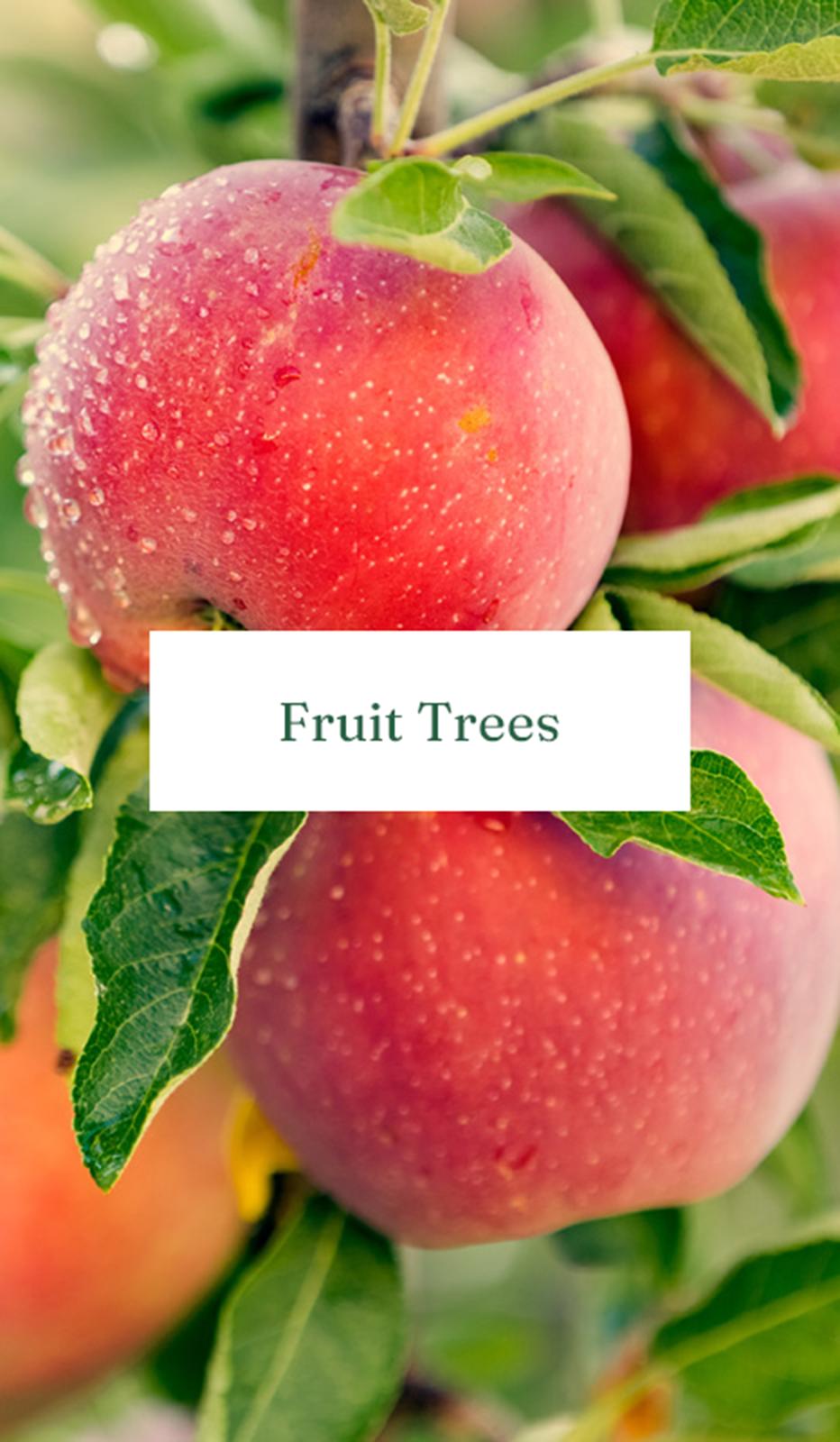 Fruit Trees Mobile