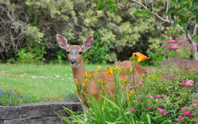 Planting to Attract Wildlife