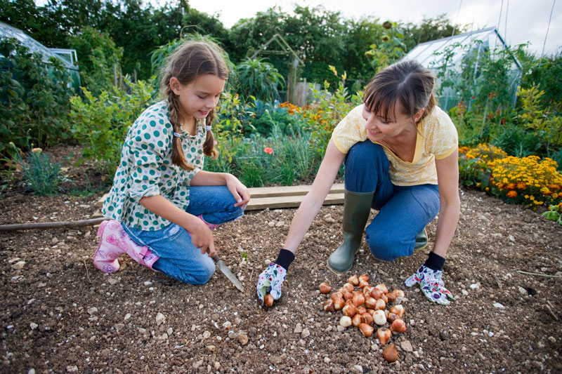 Planting Flower Bulbs in the Fall