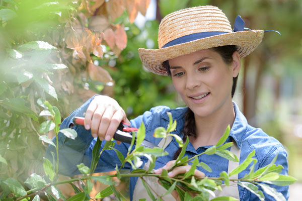 When Should You Trim Your Shrubs, Bushes, and Trees?