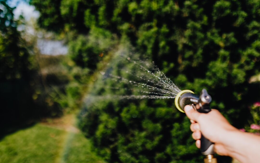 How You Can Start Planning to Reduce Your Water Needs for Next Year (Now)